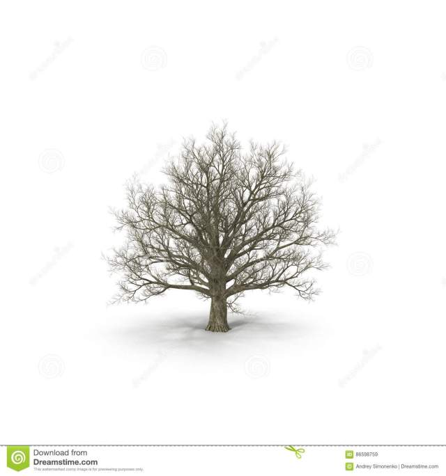 winter-old-maple-tree-isolated-white-d-illustration-background-86598759